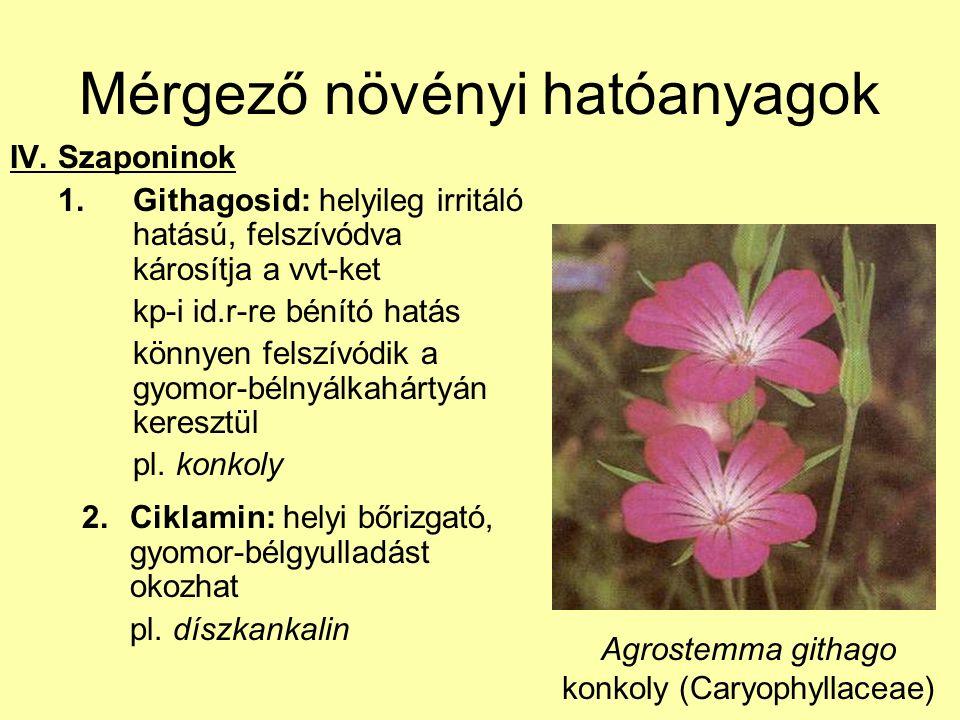 Mérgező növényi hatóanyagok IV. Szaponinok 1.Githagosid: helyileg irritáló hatású, felszívódva károsítja a vvt-ket kp-i id.r-re bénító hatás könnyen f