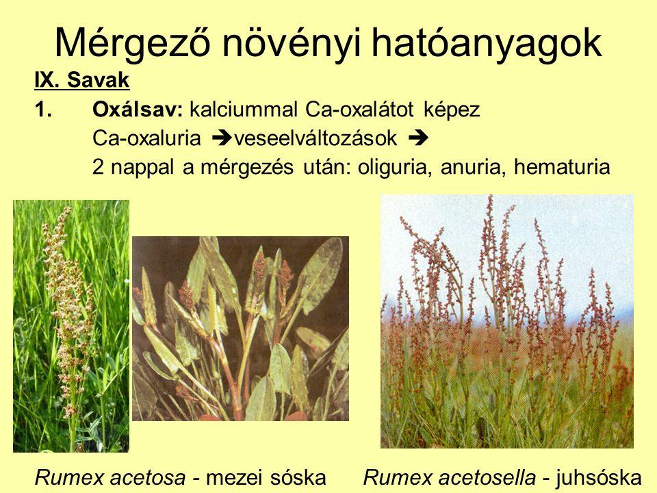 Mérgező növényi hatóanyagok IX. Savak 1.Oxálsav: kalciummal Ca-oxalátot képez Ca-oxaluria  veseelváltozások  2 nappal a mérgezés után: oliguria, anu