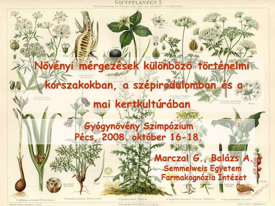Thuja occidentalis nyugati tuja (Cupressaceae)