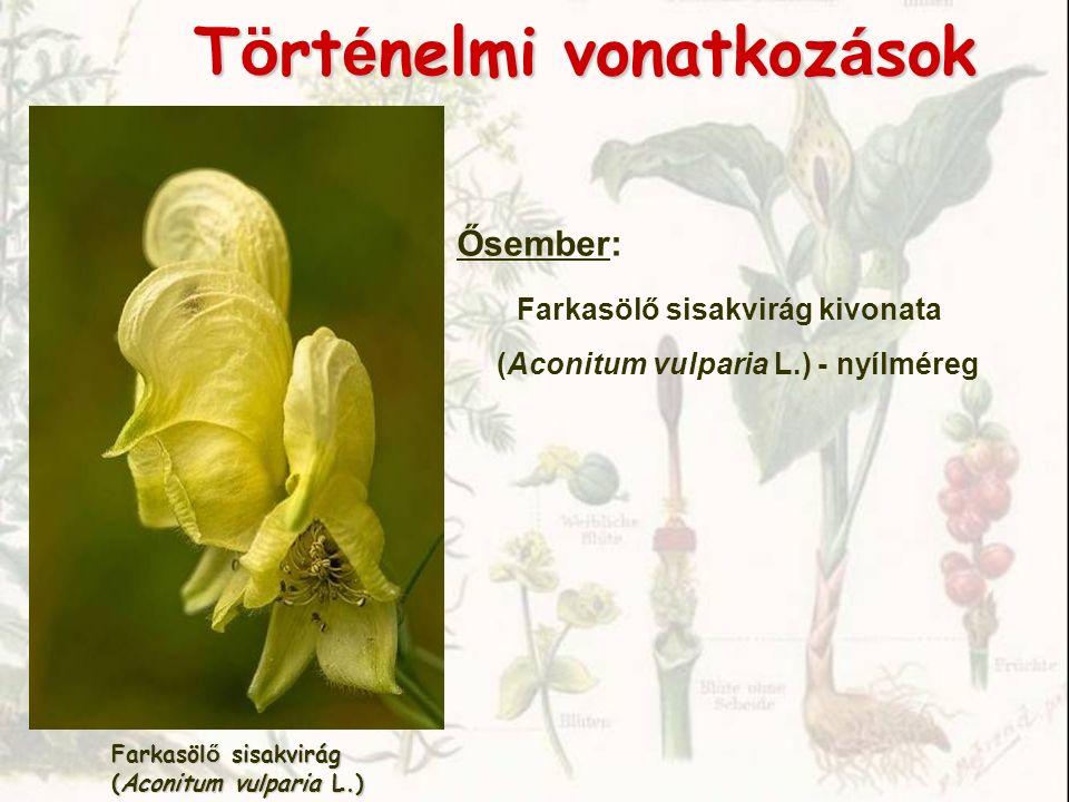 Chelidonium majus vérehulló fecskefű (Papaveraceae)