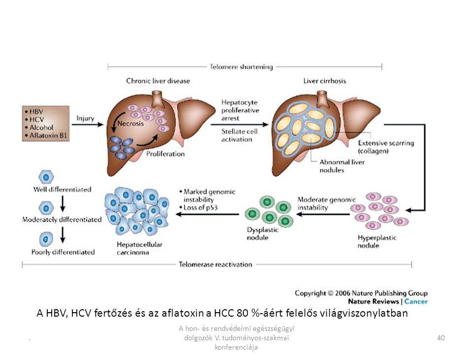 .40 A HBV, HCV fertőzés és az aflatoxin a HCC 80 %-áért felelős világviszonylatban A hon- és rendvédelmi egészségügyi dolgozók V.