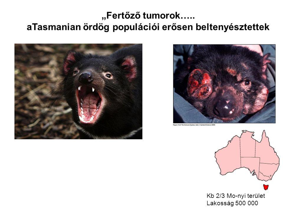 """""""Fertőző tumorok….."""