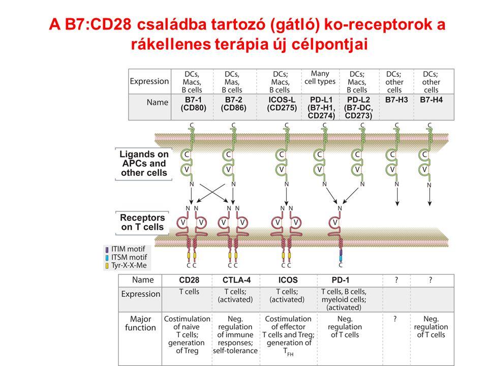 A B7:CD28 családba tartozó (gátló) ko-receptorok a rákellenes terápia új célpontjai