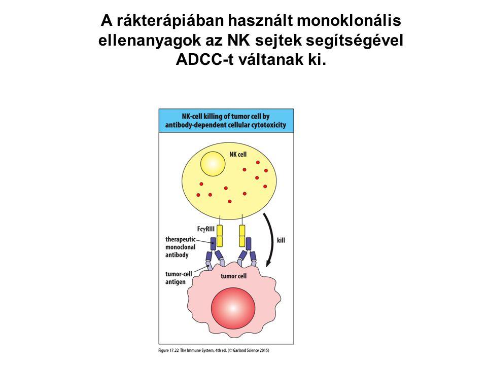 A rákterápiában használt monoklonális ellenanyagok az NK sejtek segítségével ADCC-t váltanak ki.
