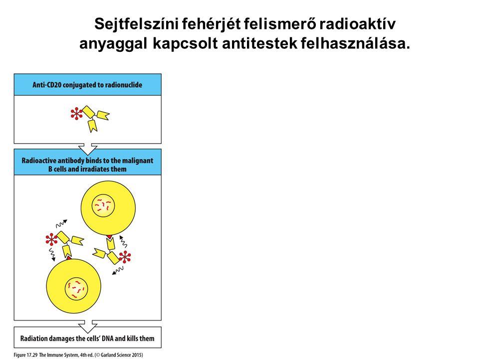 Sejtfelszíni fehérjét felismerő radioaktív anyaggal kapcsolt antitestek felhasználása.