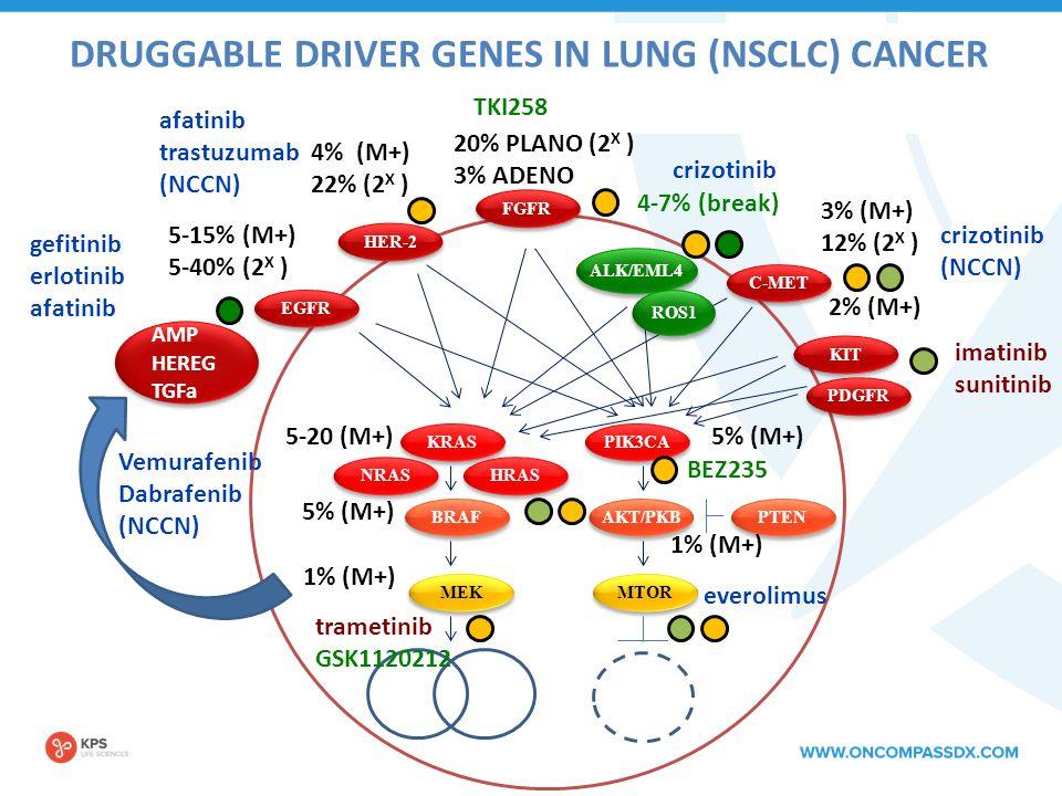 DRUGGABLE DRIVER GENES IN LUNG (NSCLC) CANCER EGFR 5-15% (M+) 5-40% (2 X ) HER-2 4% (M+) 22% (2 X ) KIT 2% (M+) C-MET 3% (M+) 12% (2 X ) FGFR 20% PLANO (2 X ) 3% ADENO ALK/EML4 KRAS BRAF MEK AKT/PKB PIK3CA MTOR 5-20 (M+) 5% (M+) 1% (M+) 5% (M+) 1% (M+) 4-7% (break) PTEN PDGFR HRAS NRAS gefitinib erlotinib afatinib trastuzumab (NCCN) imatinib sunitinib trametinib GSK1120212 Vemurafenib Dabrafenib (NCCN) crizotinib BEZ235 everolimus crizotinib (NCCN) TKI258 AMP HEREG TGFa ROS1