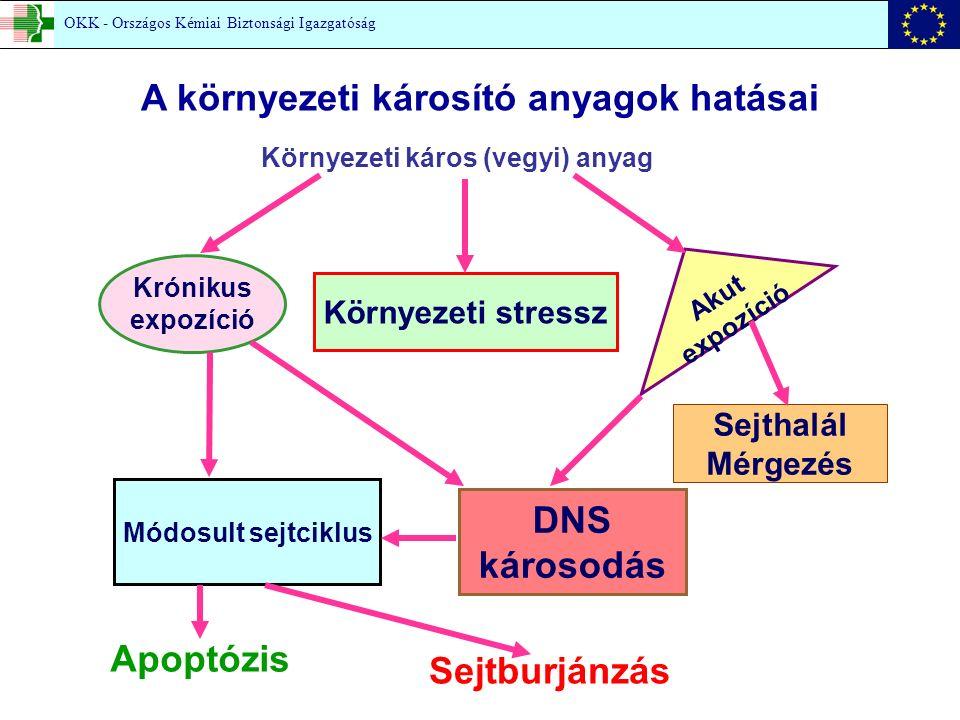 Krónikus expozíció Környezeti stressz Módosult sejtciklus DNS károsodás Környezeti káros (vegyi) anyag Akut expozíció Sejthalál Mérgezés Apoptózis Sejtburjánzás A környezeti károsító anyagok hatásai OKK - Országos Kémiai Biztonsági Igazgatóság