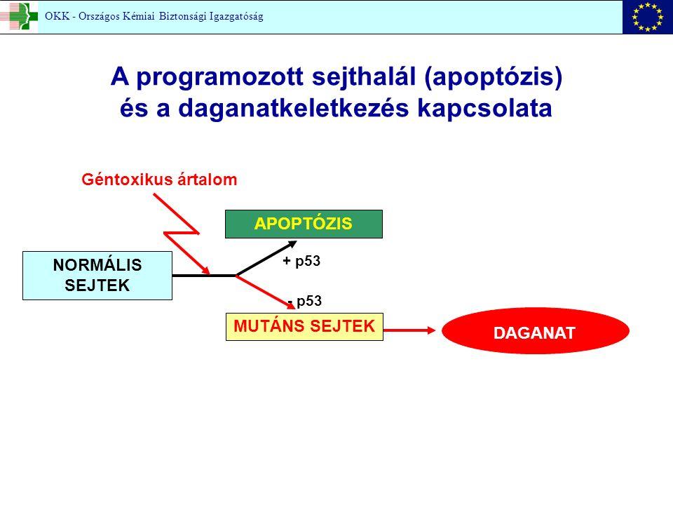 A programozott sejthalál (apoptózis) és a daganatkeletkezés kapcsolata Géntoxikus ártalom NORMÁLIS SEJTEK MUTÁNS SEJTEK APOPTÓZIS DAGANAT + p53 - p53 OKK - Országos Kémiai Biztonsági Igazgatóság