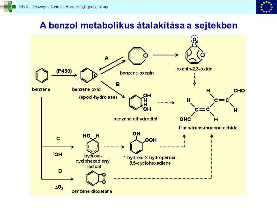 A benzol metabolikus átalakítása a sejtekben OKK - Országos Kémiai Biztonsági Igazgatóság