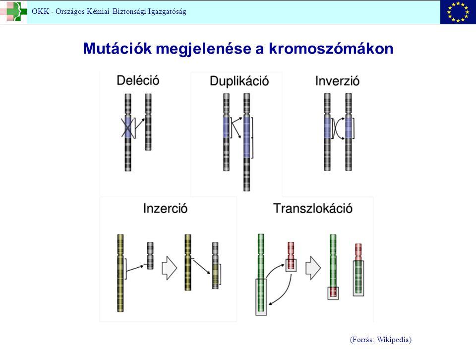 (Forrás: Wikipedia) Mutációk megjelenése a kromoszómákon OKK - Országos Kémiai Biztonsági Igazgatóság