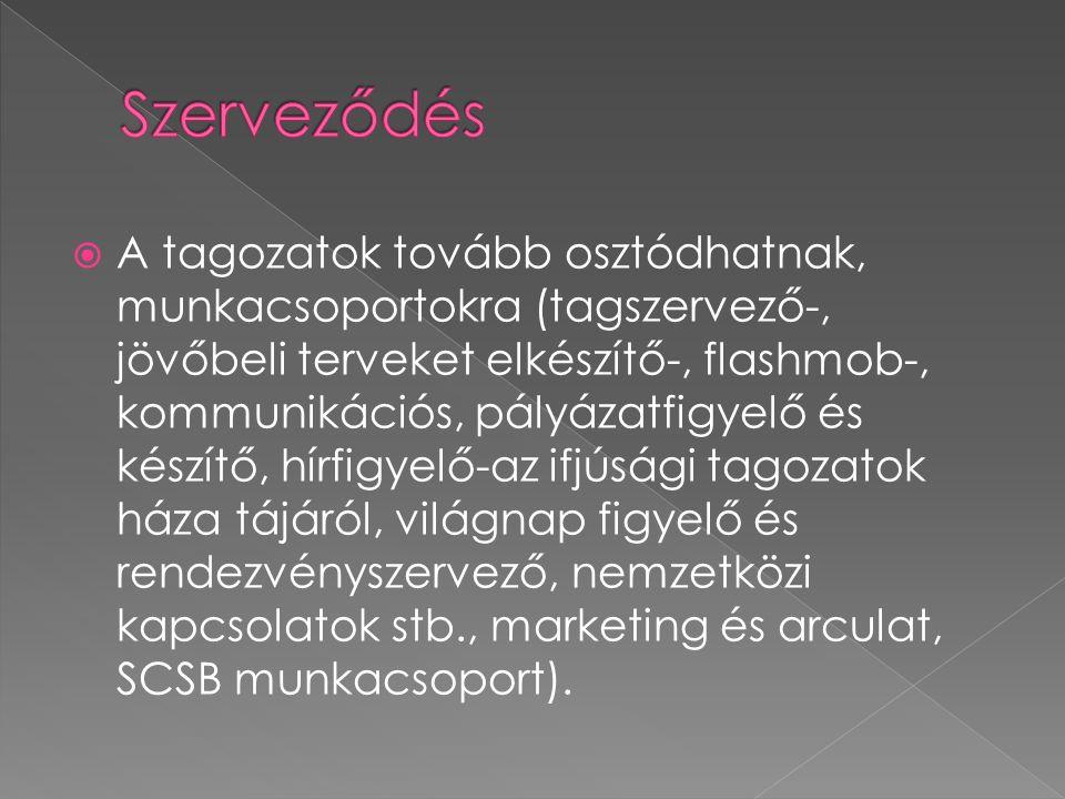  A tagozatok tovább osztódhatnak, munkacsoportokra (tagszervező-, jövőbeli terveket elkészítő-, flashmob-, kommunikációs, pályázatfigyelő és készítő, hírfigyelő-az ifjúsági tagozatok háza tájáról, világnap figyelő és rendezvényszervező, nemzetközi kapcsolatok stb., marketing és arculat, SCSB munkacsoport).