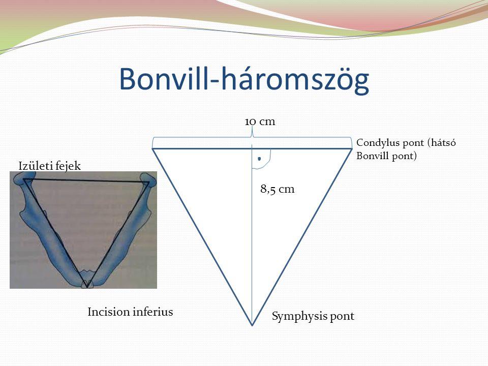 Bonvill-háromszög Condylus pont (hátsó Bonvill pont) 8,5 8,5 cm Symphysis pont Incision inferius Izületi fejek 10 cm