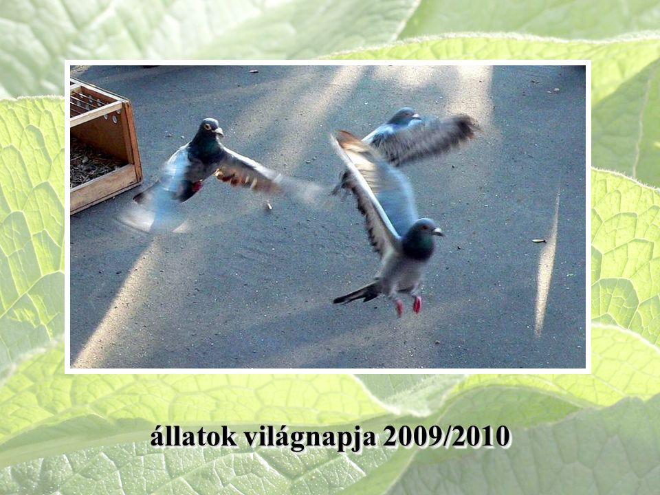 állatok világnapja 2009/2010