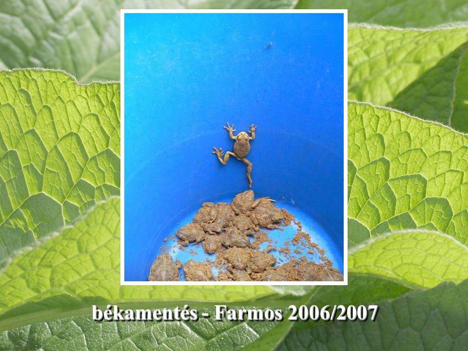 békamentés - Farmos 2006/2007