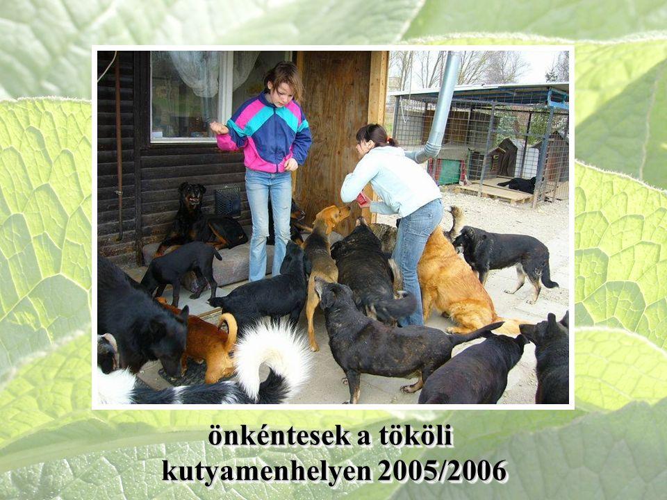 önkéntesek a tököli kutyamenhelyen 2005/2006 önkéntesek a tököli kutyamenhelyen 2005/2006