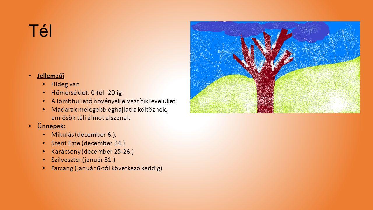 Tél Jellemzői Hideg van Hőmérséklet: 0-tól -20-ig A lombhullató növények elveszítik levelüket Madarak melegebb éghajlatra költöznek, emlősök téli álmo