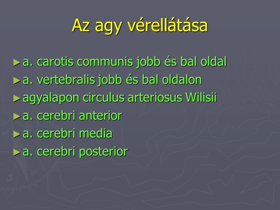 Az agy vérellátása ► a. carotis communis jobb és bal oldal ► a. vertebralis jobb és bal oldalon ► agyalapon circulus arteriosus Wilisii ► a. cerebri a