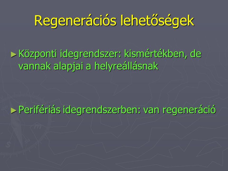 Regenerációs lehetőségek ► Központi idegrendszer: kismértékben, de vannak alapjai a helyreállásnak ► Perifériás idegrendszerben: van regeneráció