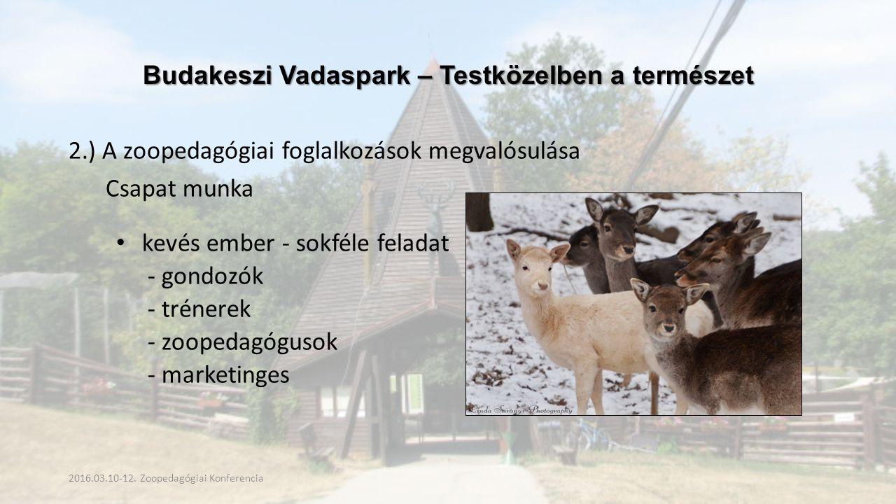 Budakeszi Vadaspark – Testközelben a természet 2.) A zoopedagógiai foglalkozások megvalósulása Csapat munka kevés ember - sokféle feladat - gondozók - trénerek - zoopedagógusok - marketinges 2016.03.10-12.