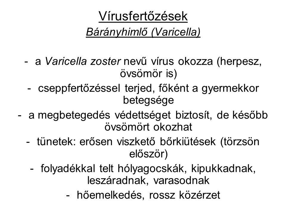 Vírusfertőzések Bárányhimlő (Varicella) -a Varicella zoster nevű vírus okozza (herpesz, övsömör is) -cseppfertőzéssel terjed, főként a gyermekkor betegsége -a megbetegedés védettséget biztosít, de később övsömört okozhat -tünetek: erősen viszkető bőrkiütések (törzsön először) -folyadékkal telt hólyagocskák, kipukkadnak, leszáradnak, varasodnak -hőemelkedés, rossz közérzet
