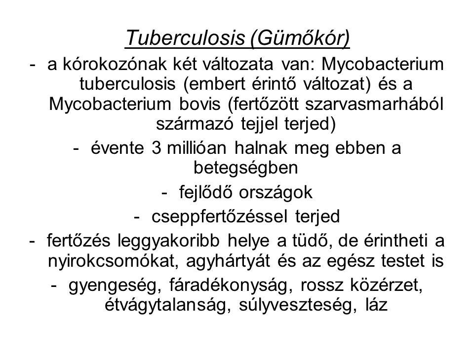 Tuberculosis (Gümőkór) -a kórokozónak két változata van: Mycobacterium tuberculosis (embert érintő változat) és a Mycobacterium bovis (fertőzött szarvasmarhából származó tejjel terjed) -évente 3 millióan halnak meg ebben a betegségben -fejlődő országok -cseppfertőzéssel terjed -fertőzés leggyakoribb helye a tüdő, de érintheti a nyirokcsomókat, agyhártyát és az egész testet is -gyengeség, fáradékonyság, rossz közérzet, étvágytalanság, súlyveszteség, láz