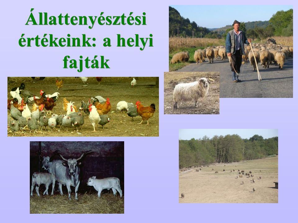 Állattenyésztési értékeink: a helyi fajták