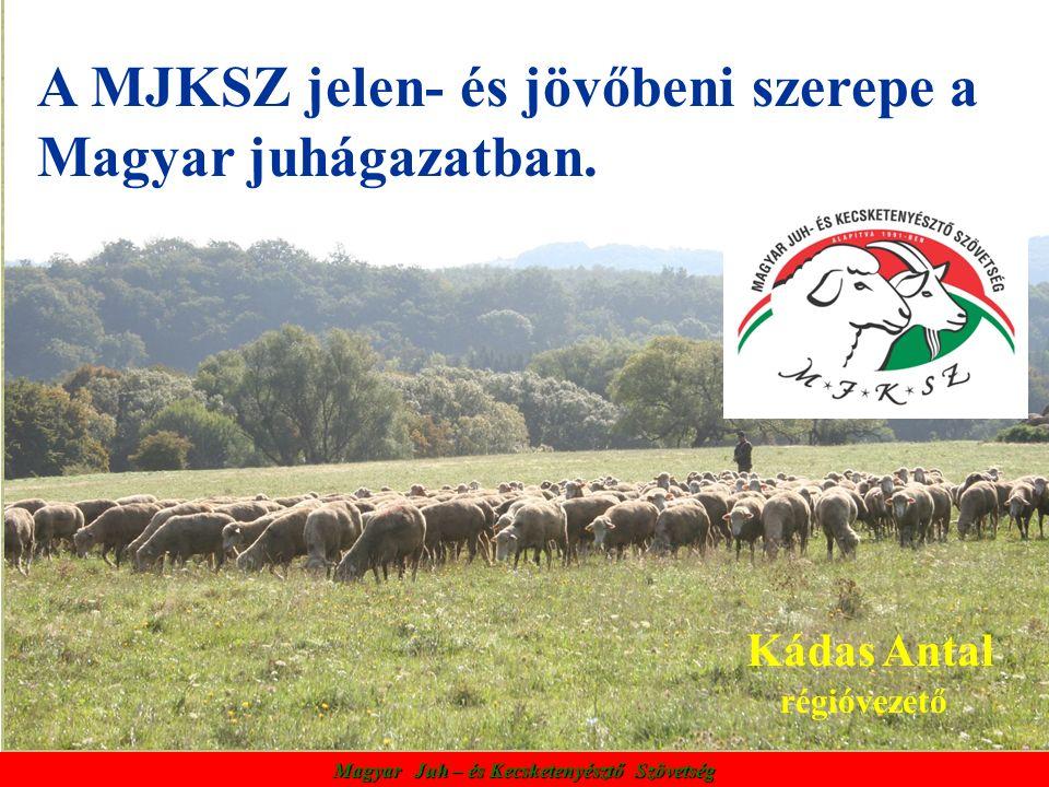 A MJKSZ jelen- és jövőbeni szerepe a Magyar juhágazatban. Kádas Antal régióvezető Magyar Juh – és Kecsketenyésztő Szövetség