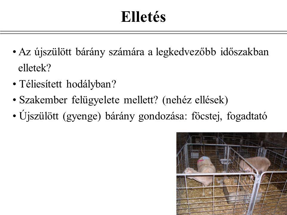 Az újszülött bárány számára a legkedvezőbb időszakban elletek? Téliesített hodályban? Szakember felügyelete mellett? (nehéz ellések) Újszülött (gyenge