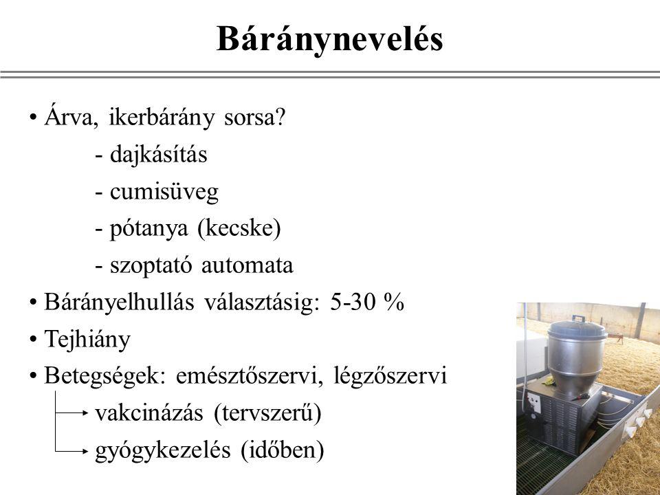 Árva, ikerbárány sorsa? - dajkásítás - cumisüveg - pótanya (kecske) - szoptató automata Bárányelhullás választásig: 5-30 % Tejhiány Betegségek: emészt