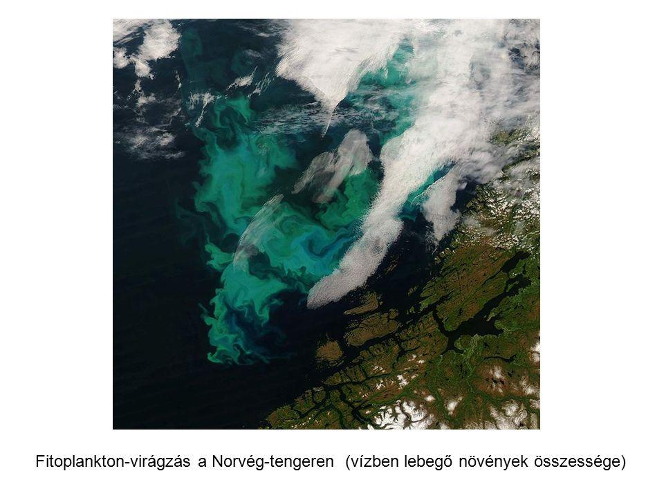 Fitoplankton-virágzás a Norvég-tengeren (vízben lebegő növények összessége)