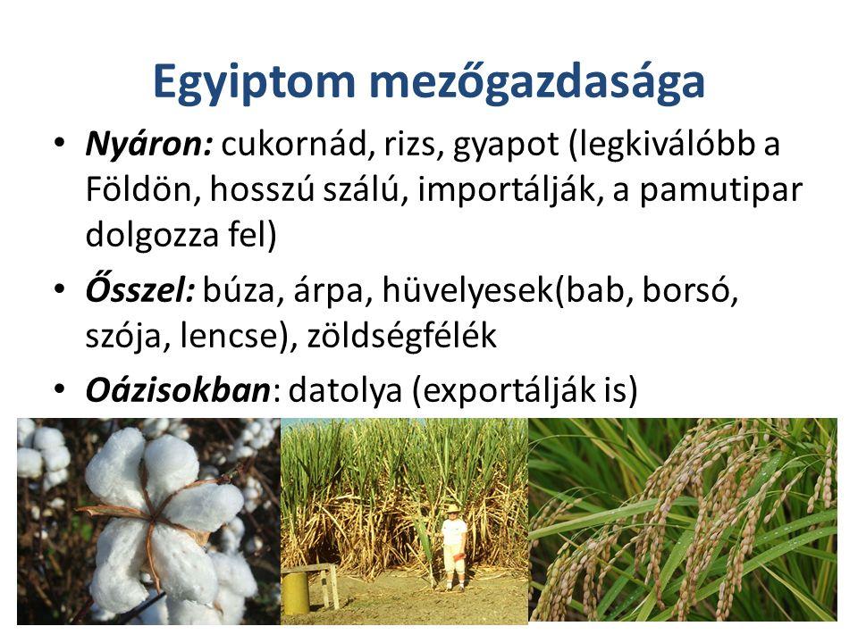 Egyiptom mezőgazdasága Nyáron: cukornád, rizs, gyapot (legkiválóbb a Földön, hosszú szálú, importálják, a pamutipar dolgozza fel) Ősszel: búza, árpa, hüvelyesek(bab, borsó, szója, lencse), zöldségfélék Oázisokban: datolya (exportálják is)