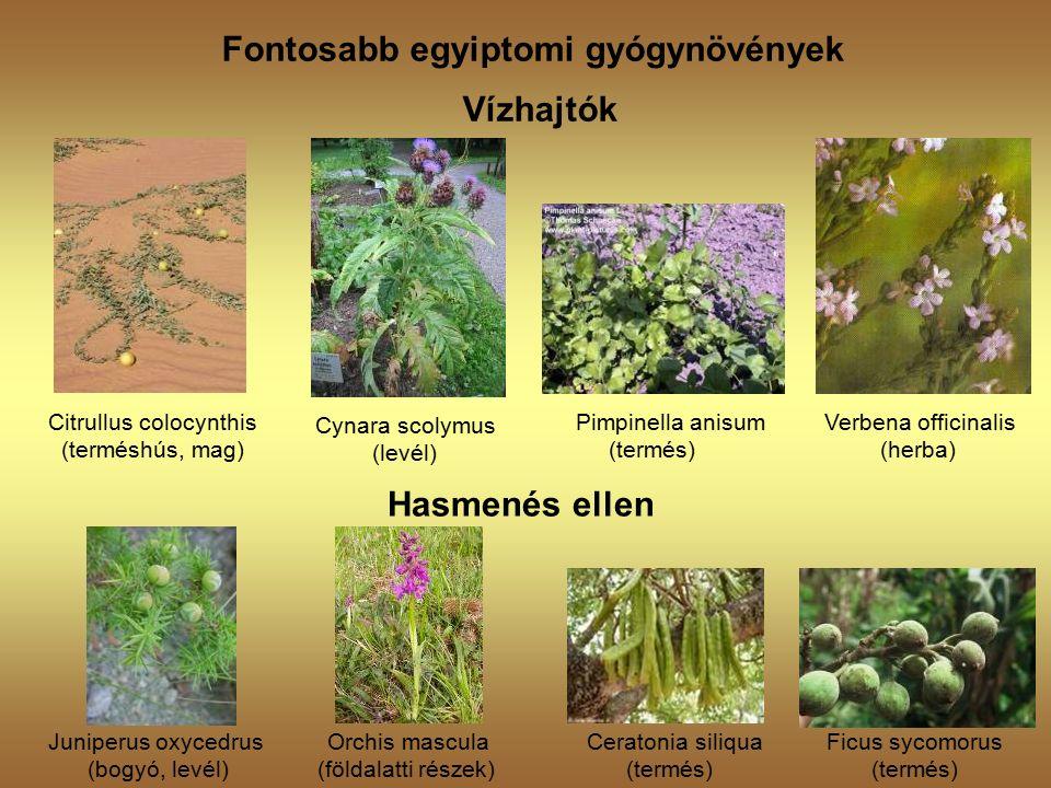 Fontosabb egyiptomi gyógynövények Vízhajtók Citrullus colocynthis (terméshús, mag) Cynara scolymus (levél) Pimpinella anisum Verbena officinalis (termés) (herba) Hasmenés ellen Juniperus oxycedrus Orchis mascula Ceratonia siliqua Ficus sycomorus (bogyó, levél) (földalatti részek) (termés) (termés)