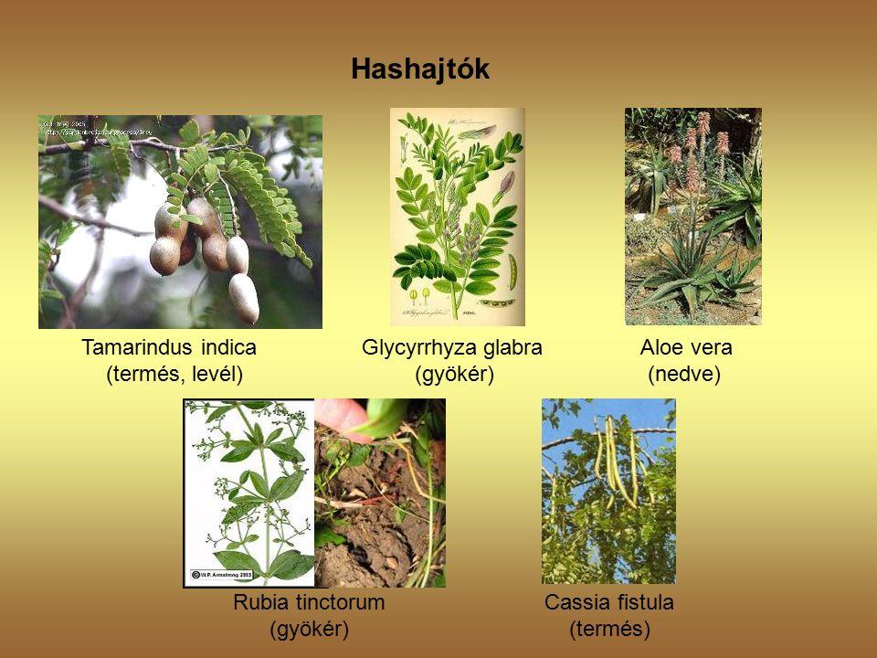 Hashajtók Tamarindus indica Glycyrrhyza glabra Aloe vera (termés, levél) (gyökér) (nedve) Rubia tinctorum Cassia fistula (gyökér) (termés)
