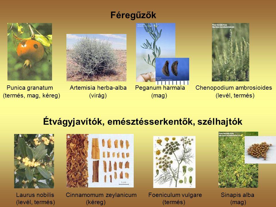 Féregűzők Punica granatum Artemisia herba-alba Peganum harmala Chenopodium ambrosioides (termés, mag, kéreg) (virág) (mag) (levél, termés) Étvágyjavítók, emésztésserkentők, szélhajtók Laurus nobilis Cinnamomum zeylanicum Foeniculum vulgare Sinapis alba (levél, termés) (kéreg) (termés) (mag)