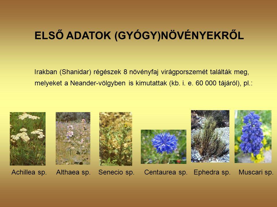 ELSŐ ADATOK (GYÓGY)NÖVÉNYEKRŐL Irakban (Shanidar) régészek 8 növényfaj virágporszemét találták meg, melyeket a Neander-völgyben is kimutattak (kb.