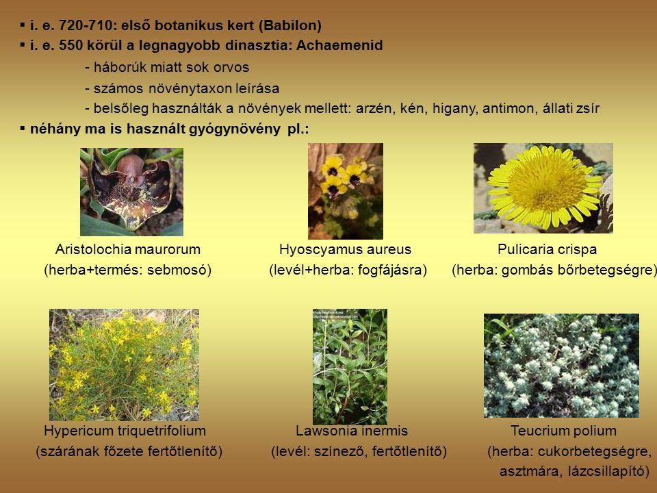  i. e. 720-710: első botanikus kert (Babilon)  i.