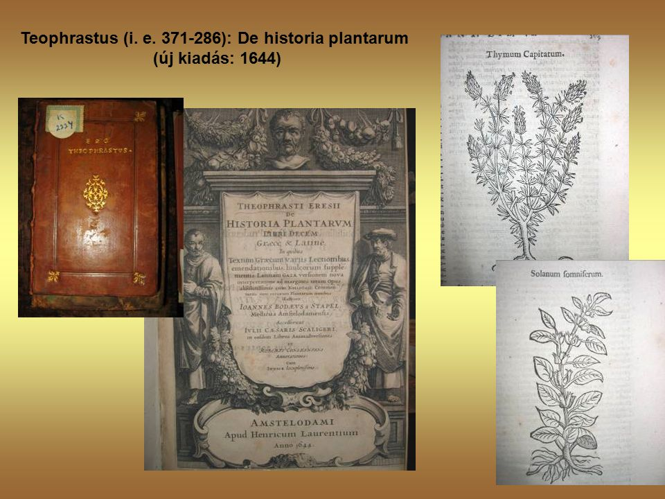 Teophrastus (i. e. 371-286): De historia plantarum (új kiadás: 1644)