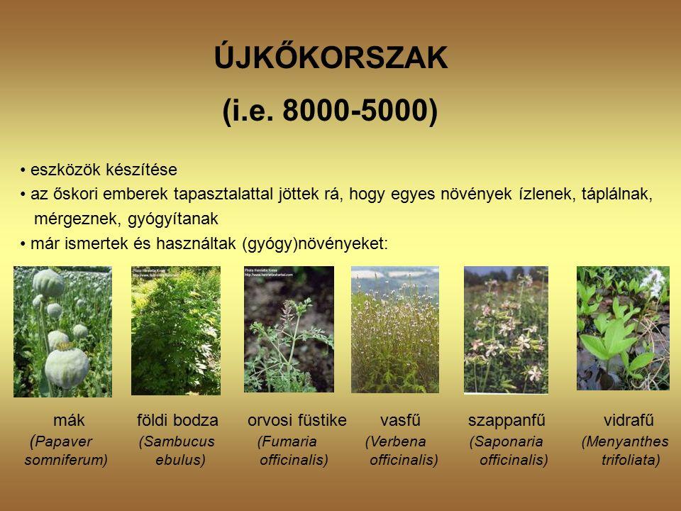 NyugtatókFrissítők Cichorium intybus Ficus carica (gyökér, mag) (termés) Moringa peregrina Prunus mahaleb (mag) (gyökér) Sesamum indicum Tilia sylvestris (mag) (kéreg, virágzat) Antidiabetikus hatásúak Ambrosia maritima Myrtus communis (herba) (levél, virág)
