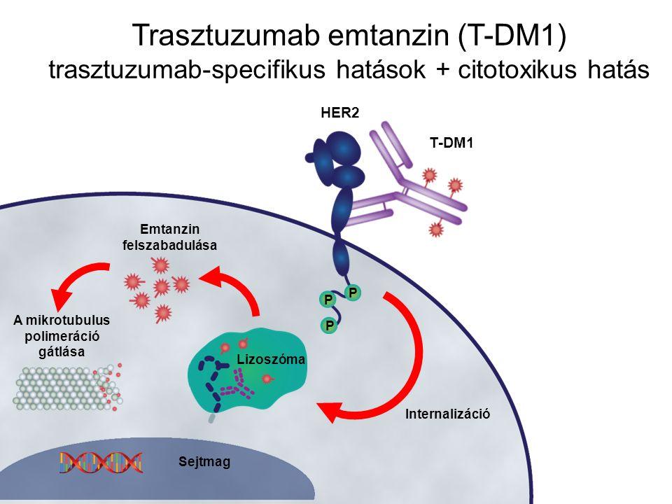 Trasztuzumab emtanzin (T-DM1) trasztuzumab-specifikus hatások + citotoxikus hatás Emtanzin felszabadulása A mikrotubulus polimeráció gátlása Internali