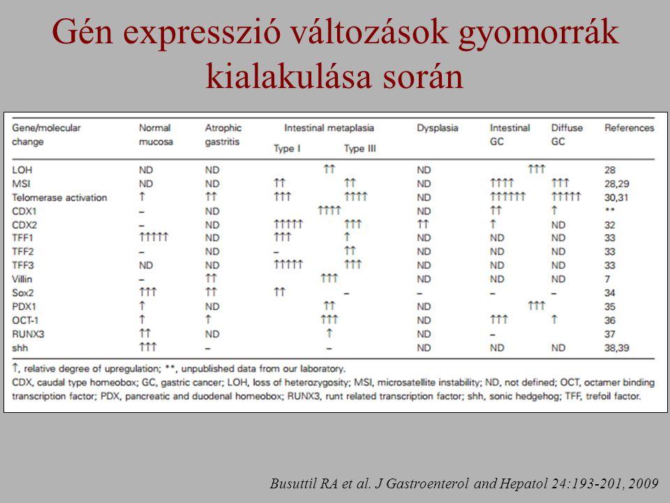 Gén expresszió változások gyomorrák kialakulása során Busuttil RA et al.