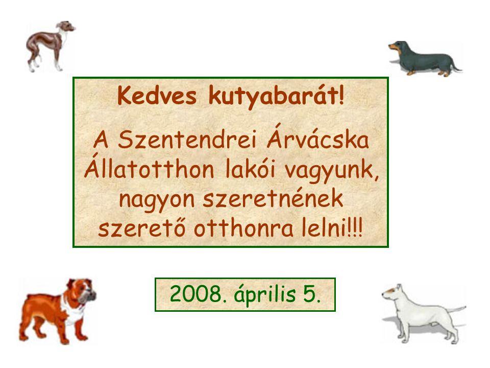 Kedves kutyabarát! A Szentendrei Árvácska Állatotthon lakói vagyunk, nagyon szeretnének szerető otthonra lelni!!! 2008. április 5.