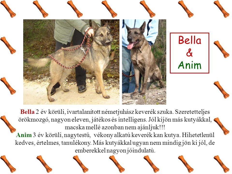 Bella & Anim Bella 2 év körüli, ivartalanított németjuhász keverék szuka. Szeretetteljes örökmozgó, nagyon eleven, játékos és intelligens. Jól kijön m