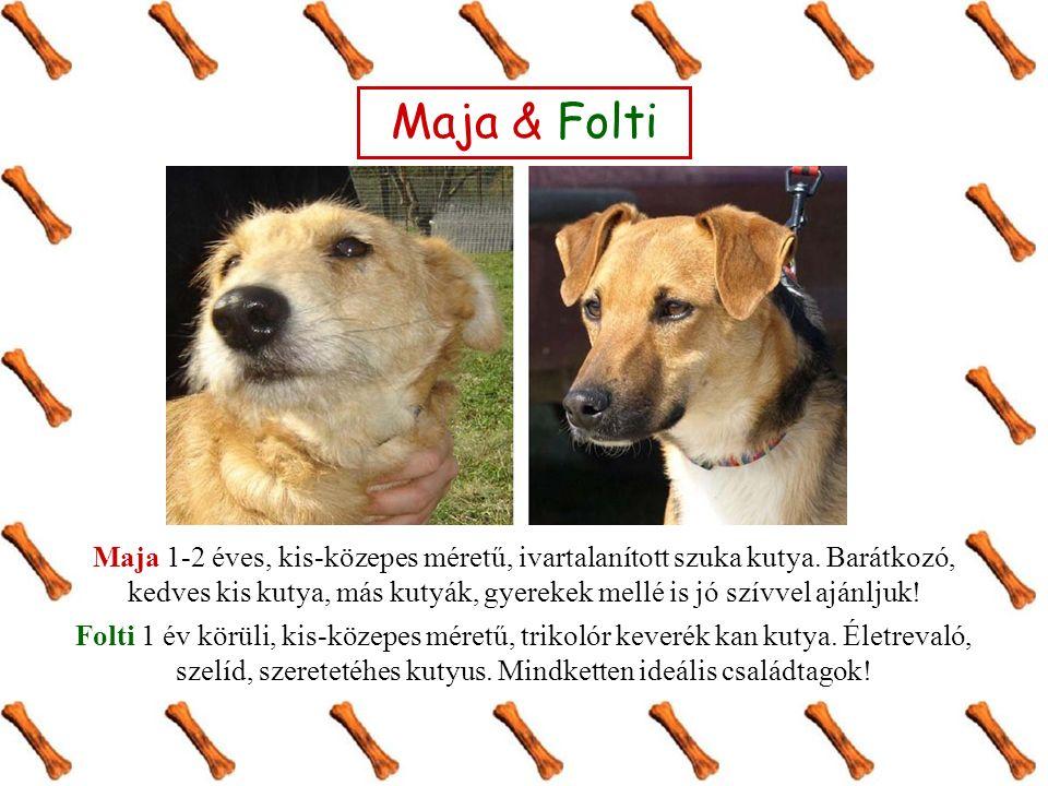 Maja & Folti Maja 1-2 éves, kis-közepes méretű, ivartalanított szuka kutya. Barátkozó, kedves kis kutya, más kutyák, gyerekek mellé is jó szívvel aján