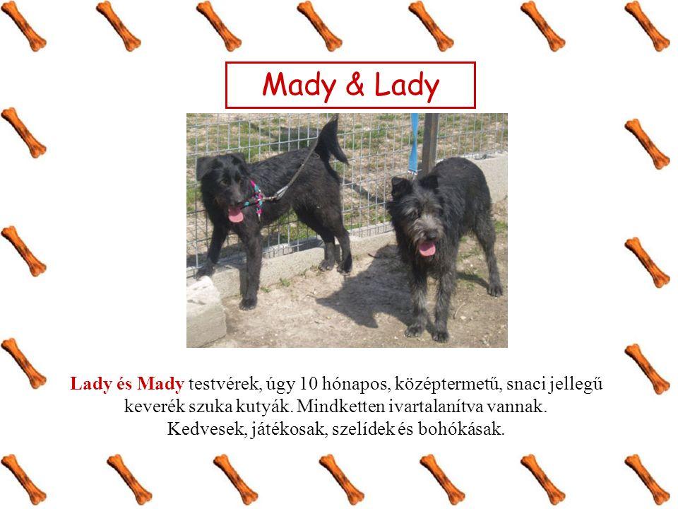 Mady & Lady Lady és Mady testvérek, úgy 10 hónapos, középtermetű, snaci jellegű keverék szuka kutyák. Mindketten ivartalanítva vannak. Kedvesek, játék