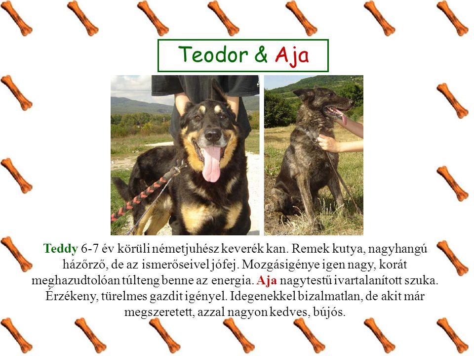 Teodor & Aja Teddy 6-7 év körüli németjuhész keverék kan. Remek kutya, nagyhangú házőrző, de az ismerőseivel jófej. Mozgásigénye igen nagy, korát megh