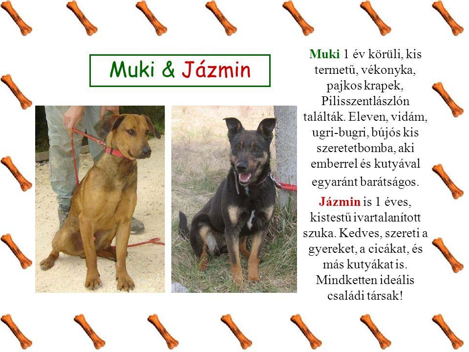 Muki & Jázmin Muki 1 év körüli, kis termetű, vékonyka, pajkos krapek, Pilisszentlászlón találták. Eleven, vidám, ugri-bugri, bújós kis szeretetbomba,
