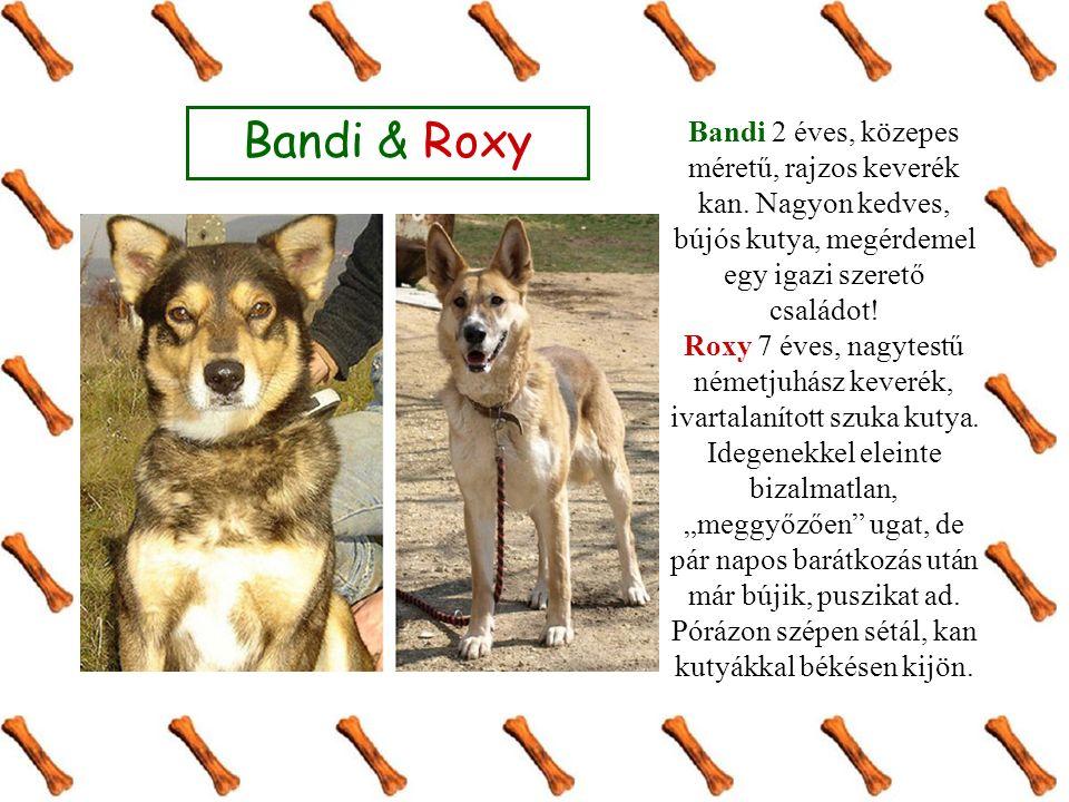 Bandi & Roxy Bandi 2 éves, közepes méretű, rajzos keverék kan. Nagyon kedves, bújós kutya, megérdemel egy igazi szerető családot! Roxy 7 éves, nagytes