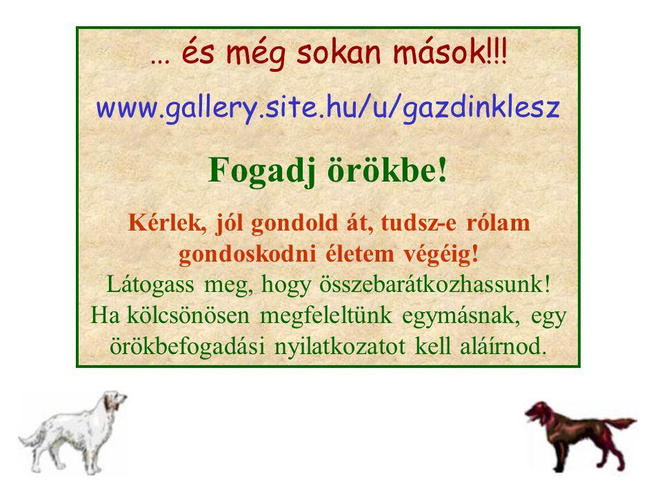 … és még sokan mások!!! www.gallery.site.hu/u/gazdinklesz Fogadj örökbe! Kérlek, jól gondold át, tudsz-e rólam gondoskodni életem végéig! Látogass meg