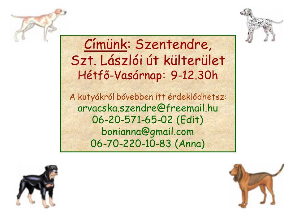 Címünk: Szentendre, Szt. Lászlói út külterület Hétfő-Vasárnap: 9-12.30h A kutyákról bővebben itt érdeklődhetsz: arvacska.szendre@freemail.hu 06-20-571