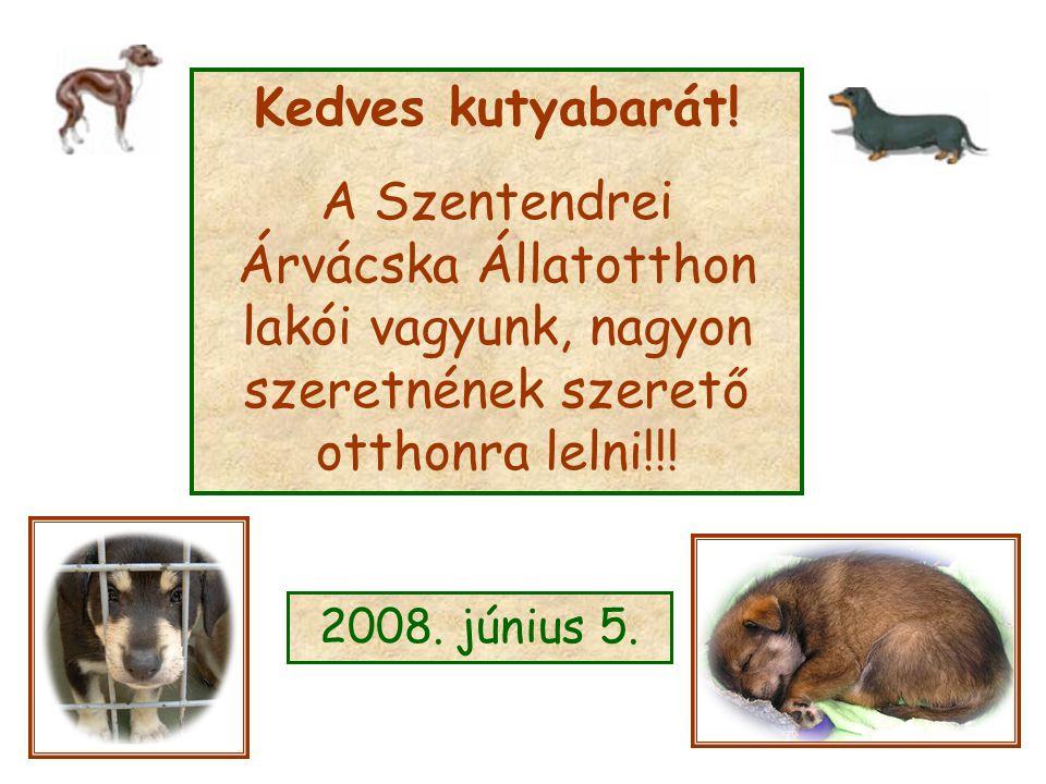 Kedves kutyabarát! A Szentendrei Árvácska Állatotthon lakói vagyunk, nagyon szeretnének szerető otthonra lelni!!! 2008. június 5.